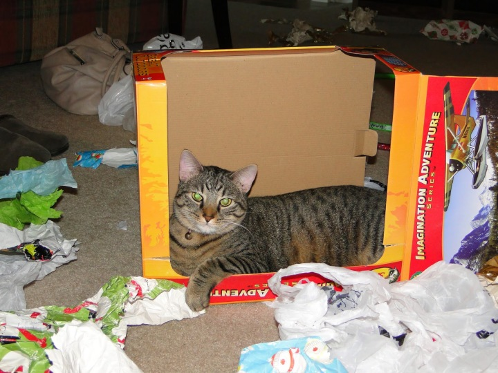 meowy christmas cat in presents box funny