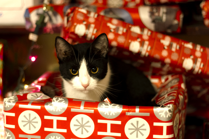 meowy christmas cat wrapping
