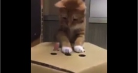orange kitten whack-a-mole
