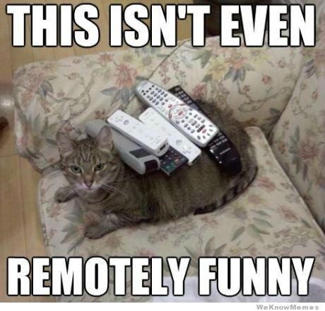 remotely-funny-cat lolcats