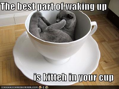 Funny-Cats-animal-humor-kitty in coffee cup