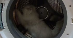 cat uses dryer as hamster wheel