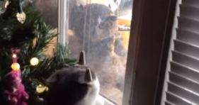 cat vs owl