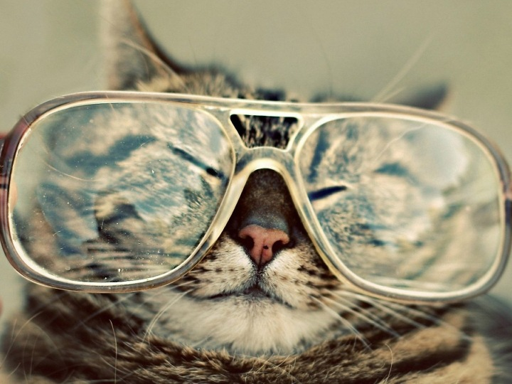 adorable grey cat in glasses-funny-cats