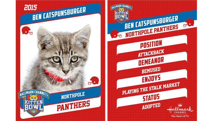 ben catspunburger quarterback cute cats