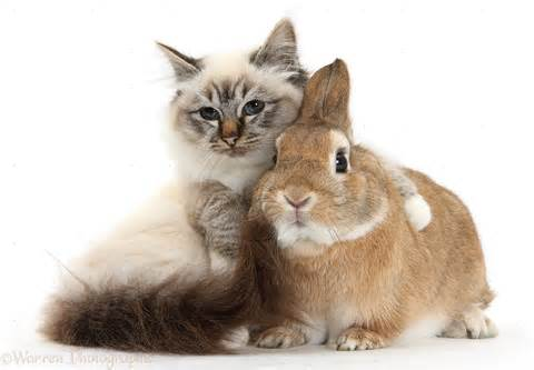 bunny and fluffy kitten caturday