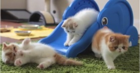 cuteness overload kittens playing on elephant slide