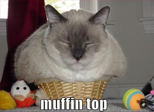 lazy kitty funny-cat-muffin-top
