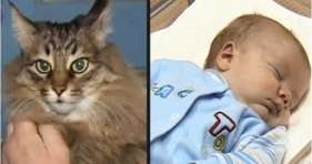 russian cat saves baby adorable