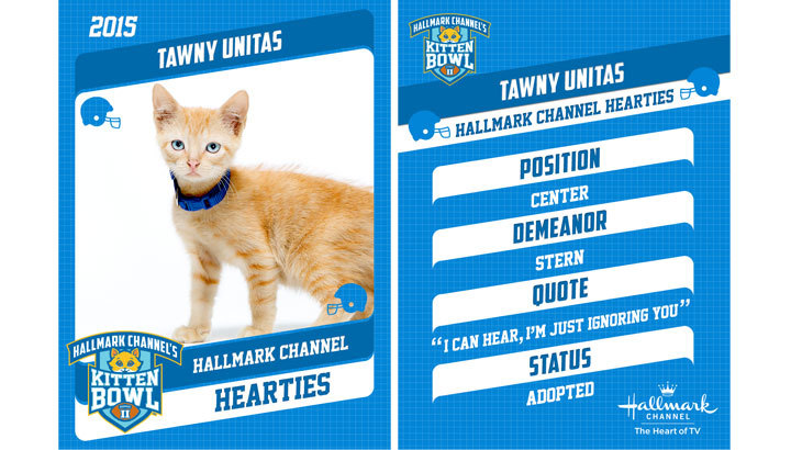 tawny united cute orange kittens
