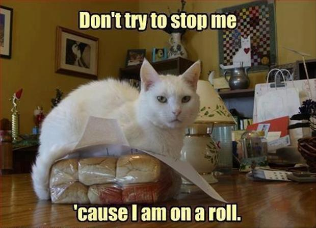 white cat on a roll lolcats
