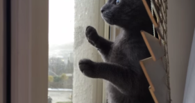 kitten sees snow