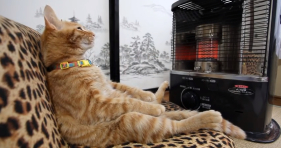 Cat Stays Warm With Heater