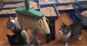 cleaning the house with adorable kittens is impossible