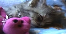 cute kitten sleeping with teddy bear