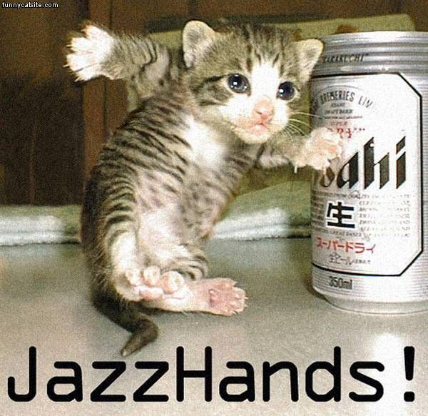 funny cat picture jazz hands beer