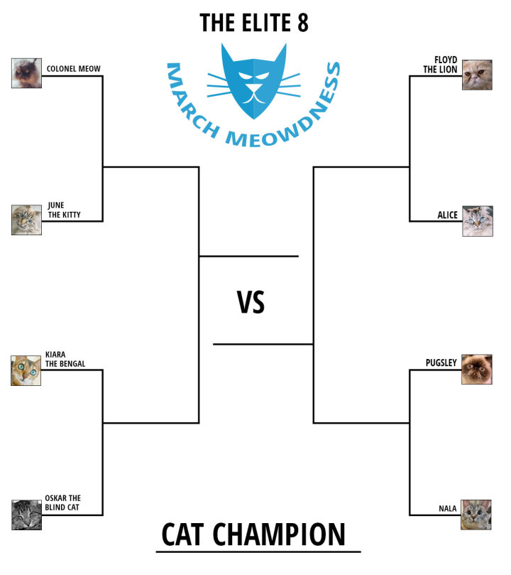 Cat-Madness-Tourney-2015-Rd-3