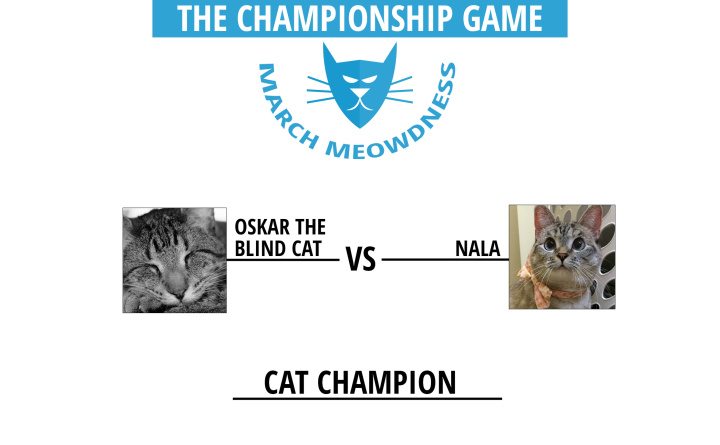 Cat-Madness-Tourney-Championship-Match