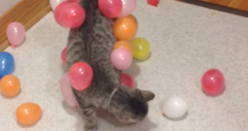 static balloon cat