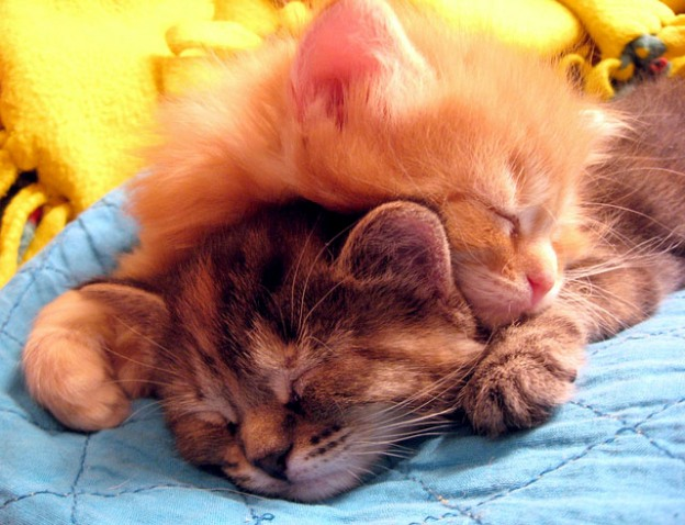 adorable sunday snuggles kittens