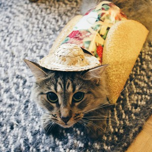 taco cat in the hat