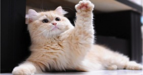 adorable high five cat