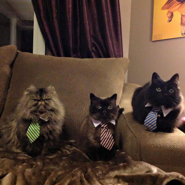 business cat conference