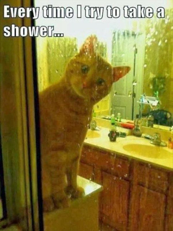caturday cat creeping on shower time
