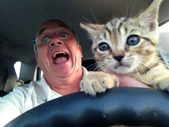 caturday kitten driving
