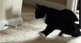 funny cats vs door stoppers
