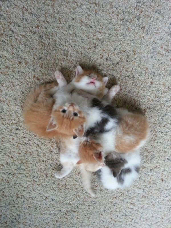kitten pile of cuteness