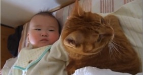 patient kitten and baby furriends