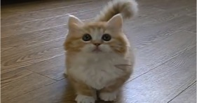 possibly fluffiest kitten ever
