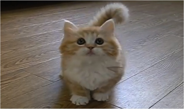 Is This The Fluffiest Kitten Ever Cats Vs Cancer