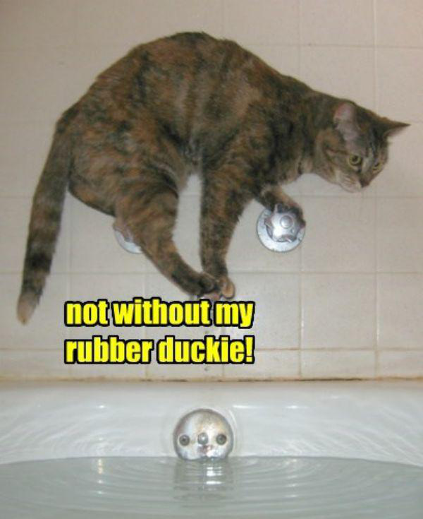 rubber duckie needed cute cat