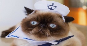 adorable fleet week sailor kitty