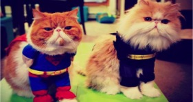 adorable superhero cats