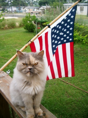 angry cat memorialday american flag