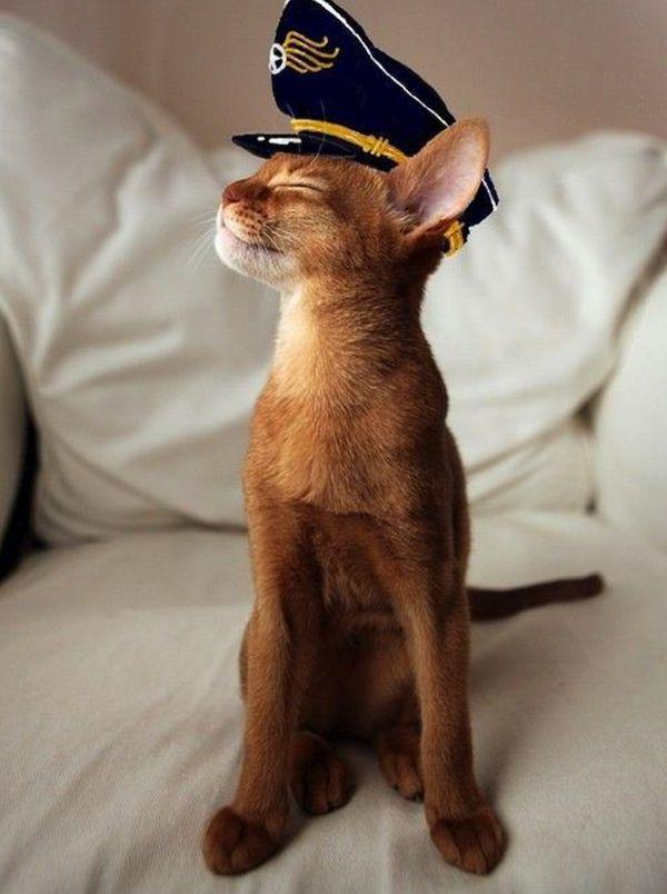 cat-saturday cat in a navy hat adorable