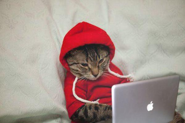 cat saturday caturday surfing the internet