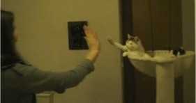 high five helpful cat bro