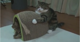maru holds tight to scratching board