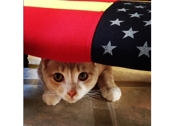 memorial day kitty american flag