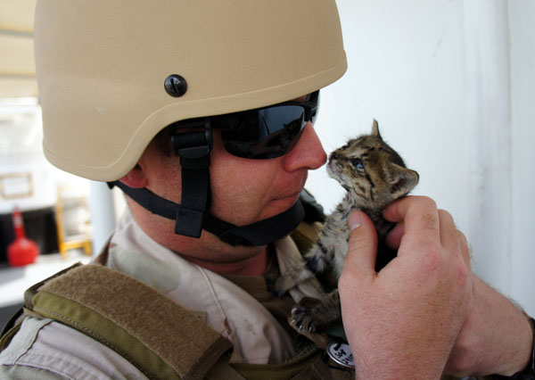 soldiers-with-kittens-memorial-day
