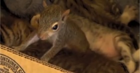 squirrel adopted by cat purrs like kitten