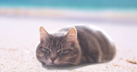 cats love the beach