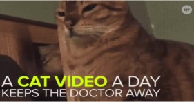a cat video a day keeps the doctors away