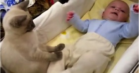 adorable babysitter kitty calms baby down