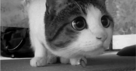 adorable confused kitty caturday lolcats