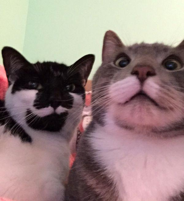 cat saturday bestie selfies adorable kitties